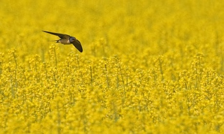 Pesticides are killing the birds and the bees