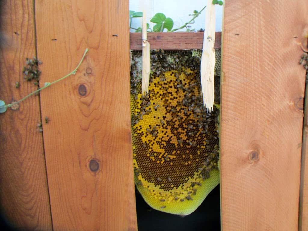 Collection of bee removal photos