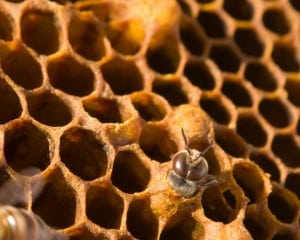 Here is a great program on the pesticides that are killing our bees