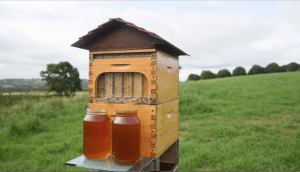 flow hive,  tricking people into thinking they can get honey without the work