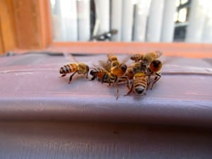 Killer bees hit again